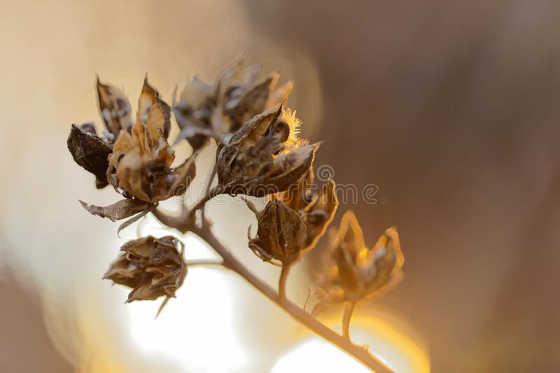 Dried Flowers In The Sun royalty free stock photography