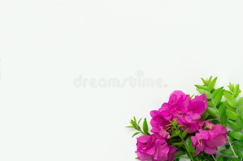 Small elegant bouquet of garden fuchsia pink flowers green twigs on white background. Creative minimalist style. Easter spring stock images