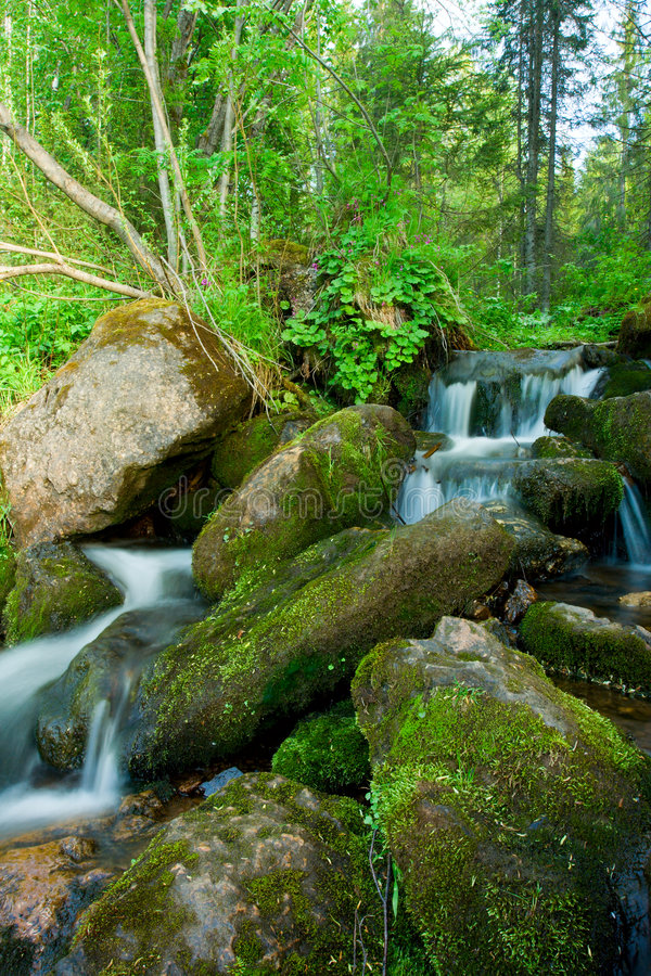 Free Small Falls In A Wood. Royalty Free Stock Photography - 5453177
