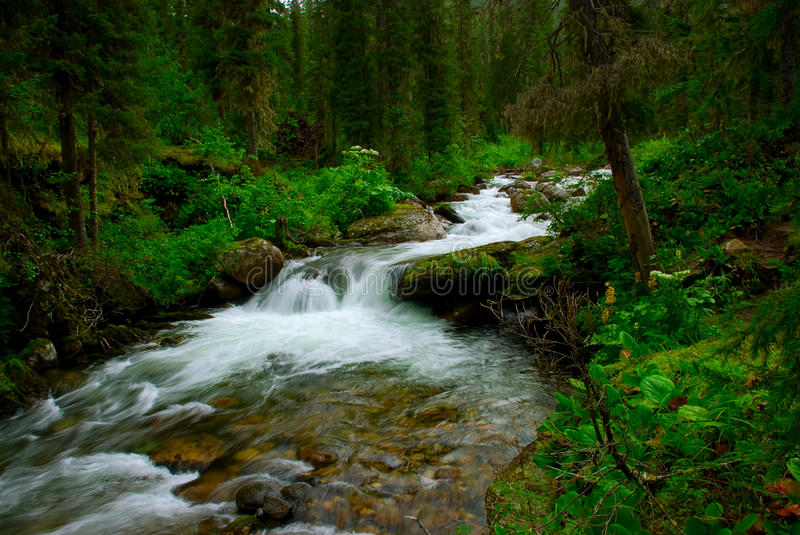 Small Falls Over Mossy Rocks Royalty Free Stock Images