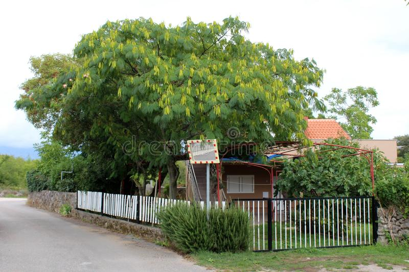 Small family house with grass on driveway surrounded with white picket fence and dense vegetation next to tall tree with dense. Leaves positioned next to local stock photos