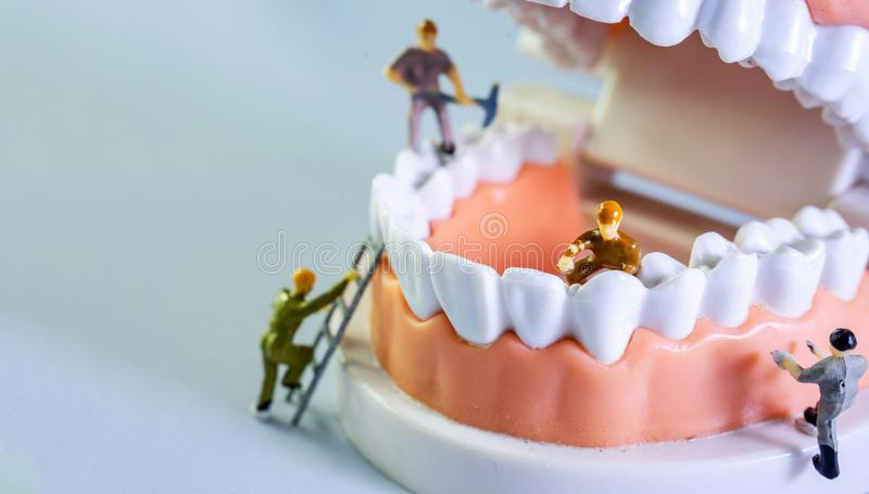 Small figure worker cleaning tooth model as medical and healthcare concept, Regular checkups are essential to oral health.  stock images