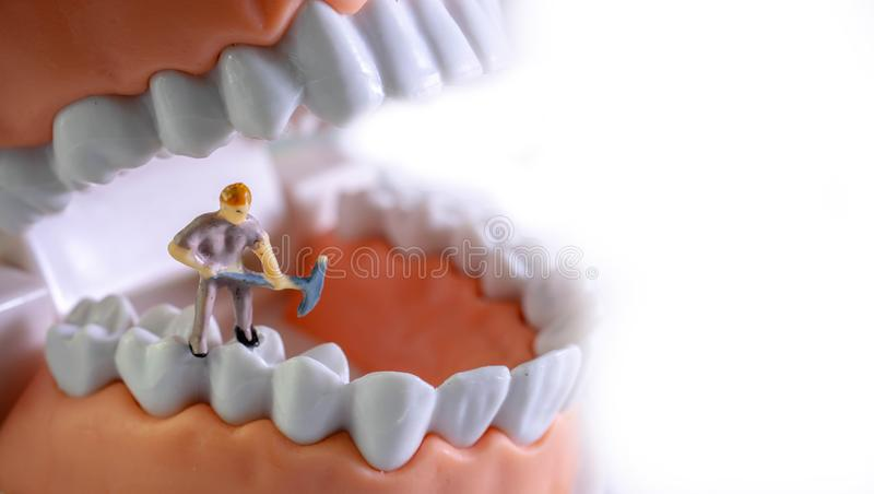 Small figure worker cleaning tooth model as medical and healthcare concept, Regular checkups are essential to oral health.  royalty free stock photos