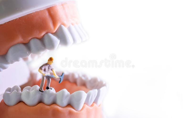 Small figure worker cleaning tooth model as medical and healthcare concept, Regular checkups are essential to oral health.  royalty free stock images