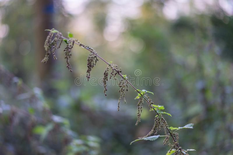Small filigran plant in forrest close up bokeh. View royalty free stock photo