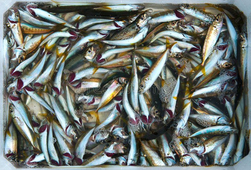 Download Small fish stock photo. Image of industry, catch, concept - 25372076
