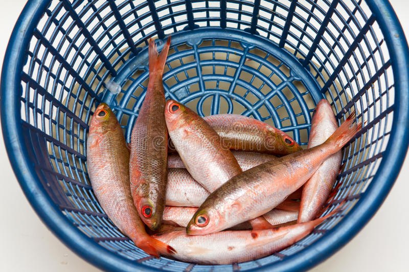 Download Small Fish In The Blue Basket Stock Photo - Image: 58326152