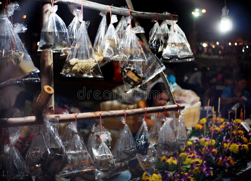 Small fish in small transparent plastic bag. For sale for fish releasing ritual in traditional buddhism ceremony in Thailand such as new year, birthday stock photos