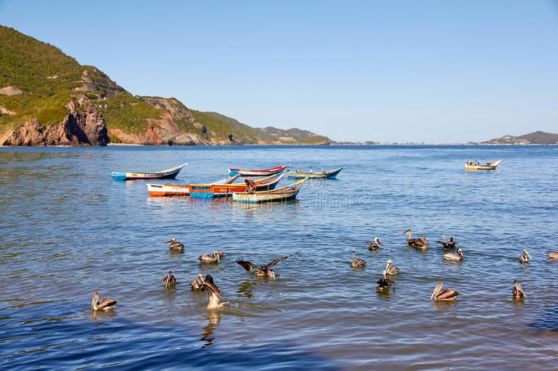 Small fishing boat with pelicans royalty free stock images