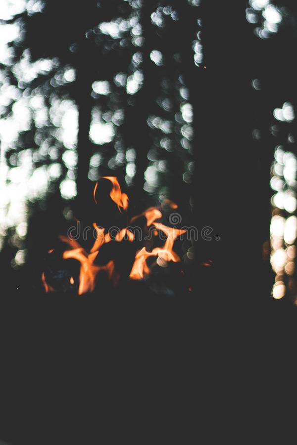 Small flames of fire burning in a forest stock photos