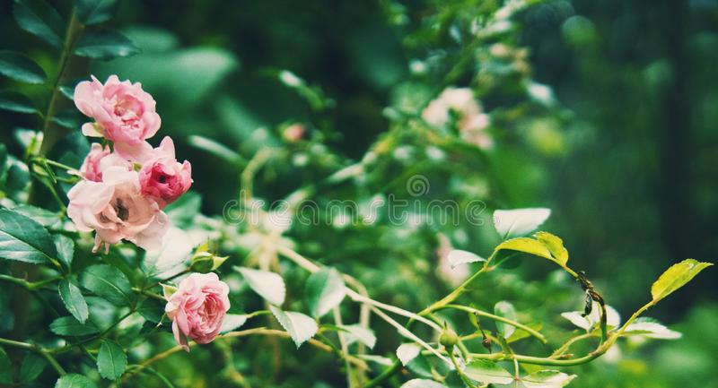 Small florets in the garden. royalty free stock photo