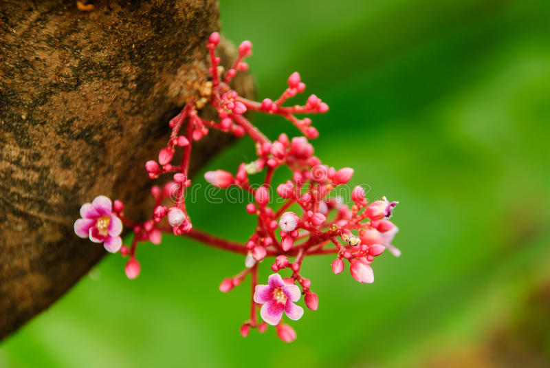 Download Small flower stock image. Image of small, flora, bloom - 29494763