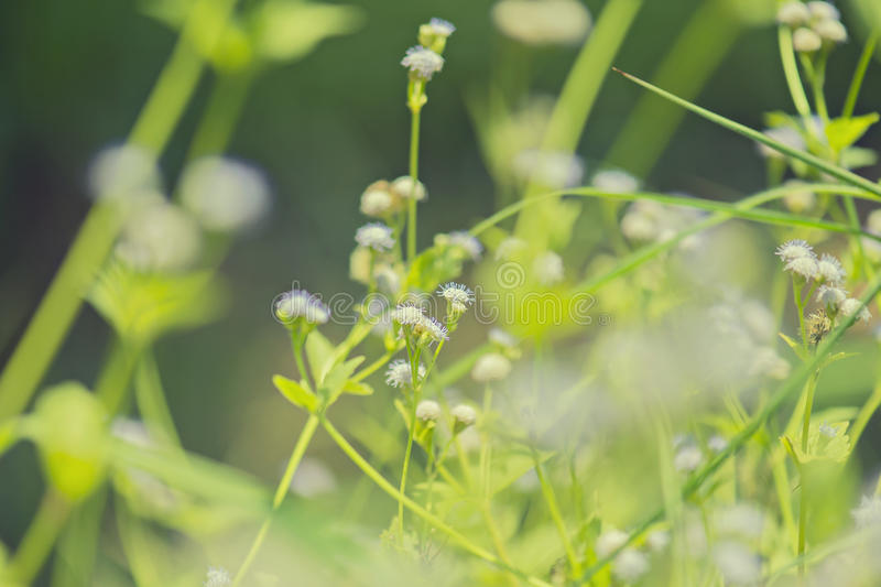 Small flower on green bright background. royalty free stock photography