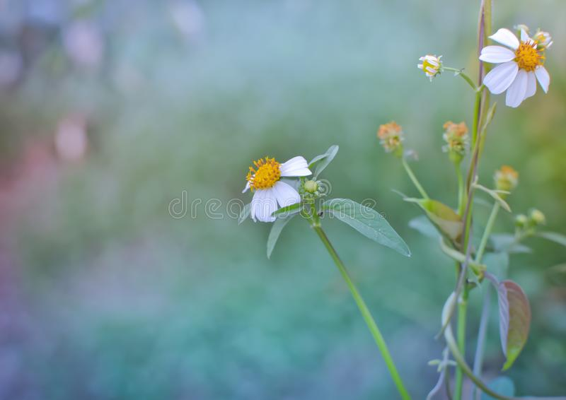 Small flower morning. Small flowers with warm morning light stock images