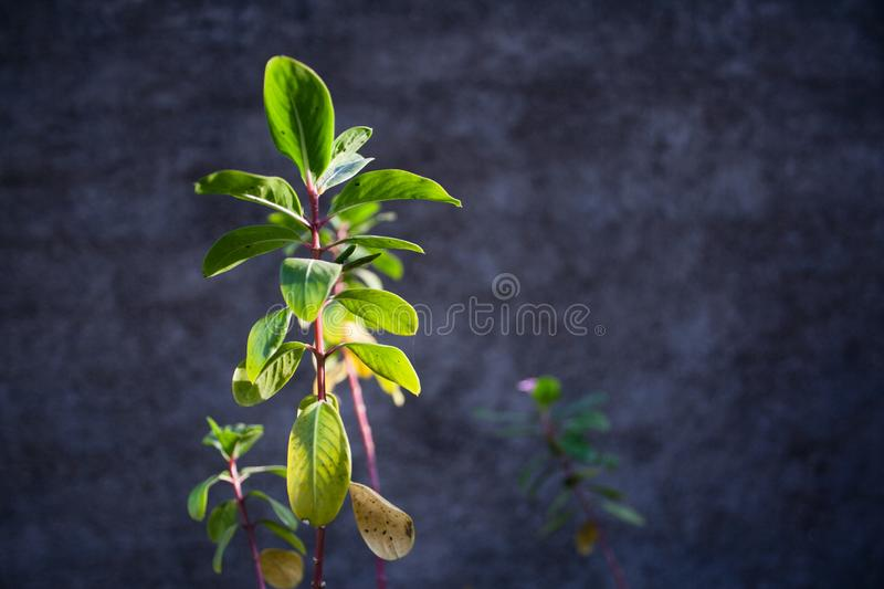 Small flower plant in the sunlight stock photography