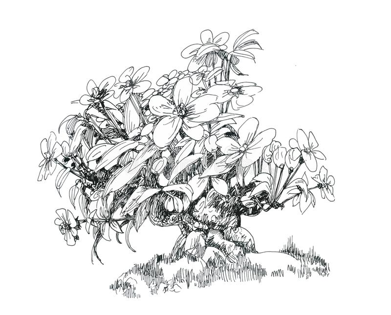 A small flowering tree in oriental style, a thick trunk, a bonsai from the collection. stock illustration
