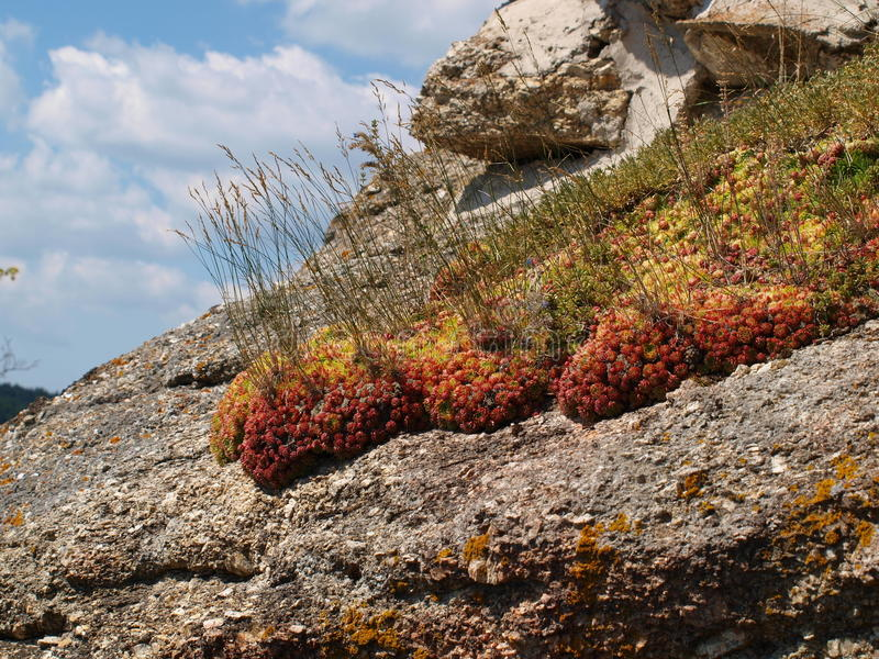 Small flowers blooming in the rock. Arbesbach Austria stock photo