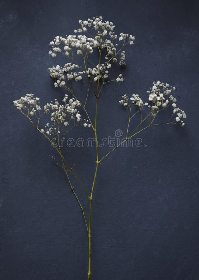 Small flowers on dark background stock image