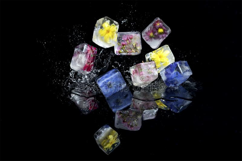 Small flowers frozen into ice cubes fall and bounce onto black s stock photo