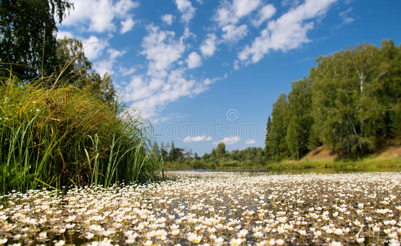Download Small flowers stock photo. Image of wild, leaf, flower - 31621266