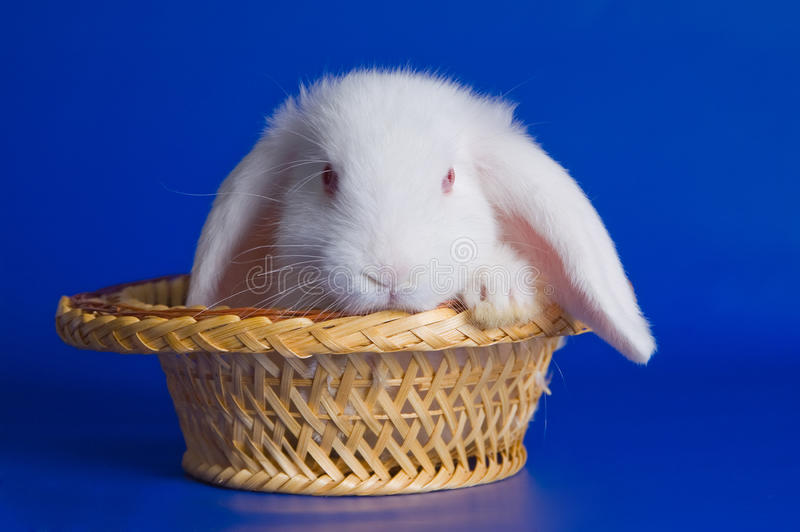 Small Fluffy Rabbit Stock Images