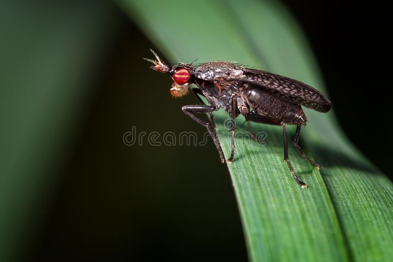 Small fly with big red eyes and a crown on the head royalty free stock photos
