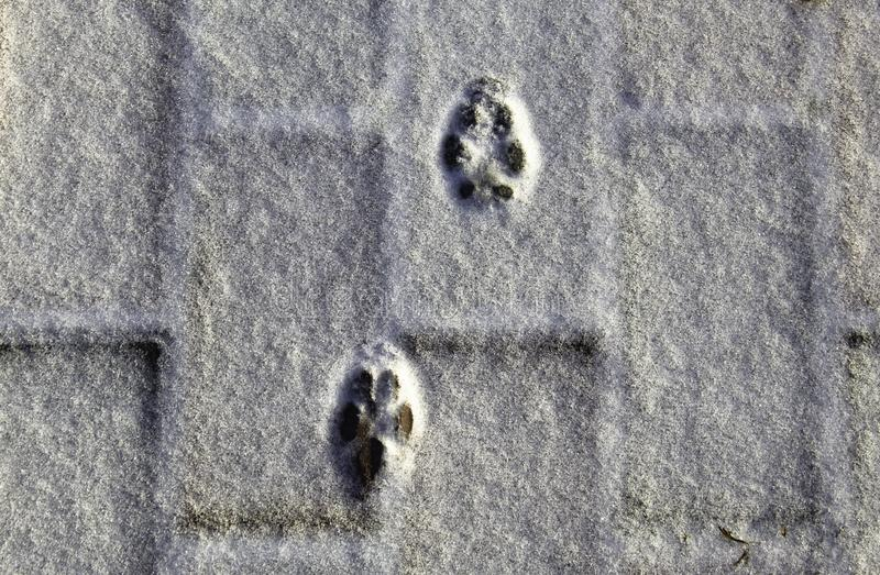 Small footprints on the snow royalty free stock image