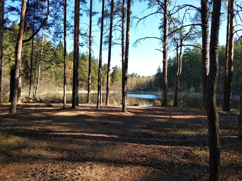 Small forest lake in spring warm sunny day. stock photos