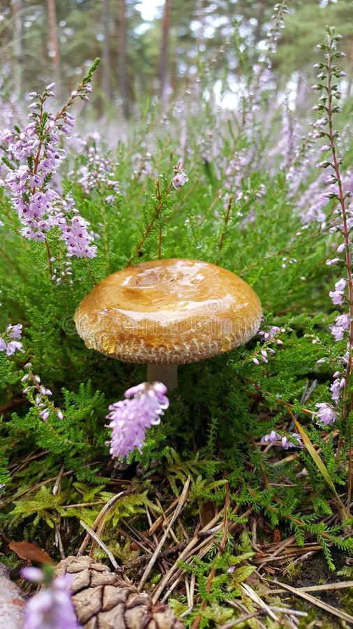 A small forest mushroom among plants stock photo