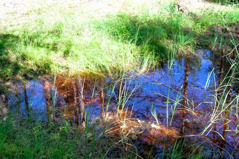 Small forest puddle swamp, lake or pond with reflection of sky and trees in water, grass surrounded royalty free stock images