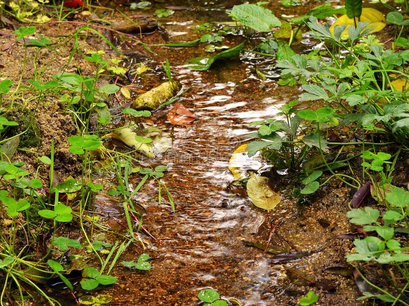 A small forest stream flows among green grass on a warm autumn day, some yellow leaves are in water. Close up stock photos