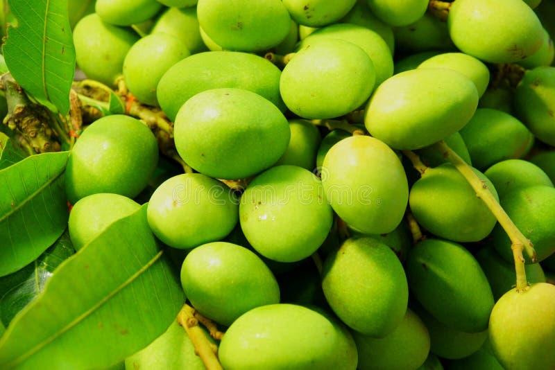 Small Fresh green mangoes . Mangifera indica L. Var stock photos