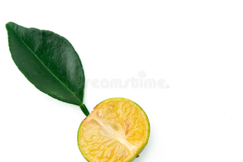 Small Fresh green oranges with leaf, on a white background. Cut Green tangerines. Tropical fruits collection. Cut Small Green tangerines with leaf. Fresh green stock photo