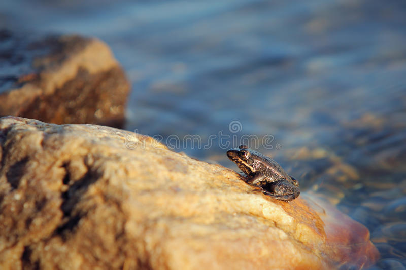 Download Small frog stock photo. Image of green, sunlight, wildlife - 16812462