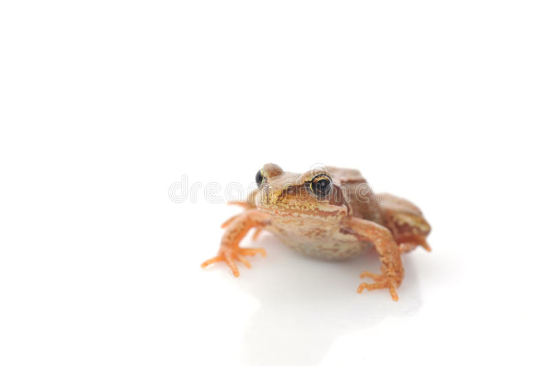 Small frog very close up stock image