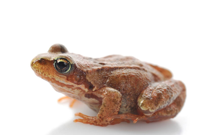 Small frog very close up stock photo