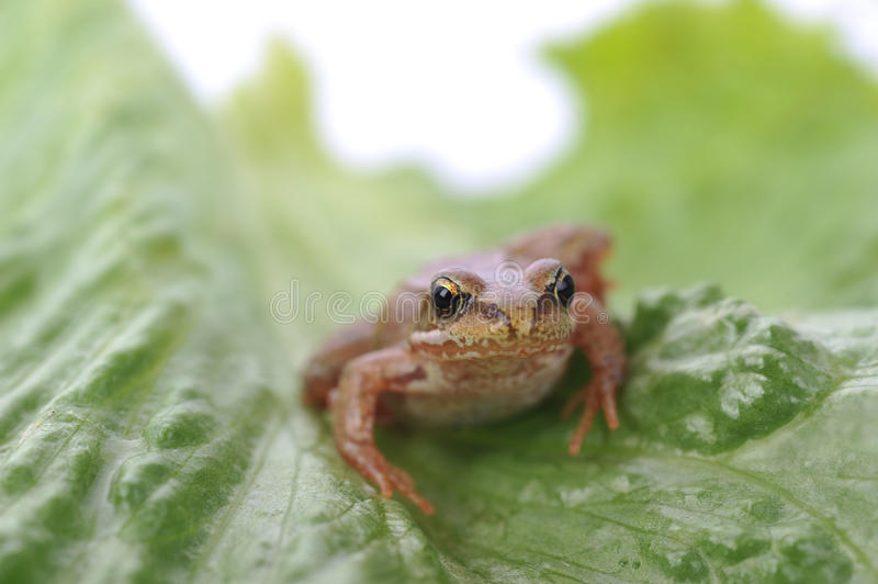 Small frog very close up stock photos
