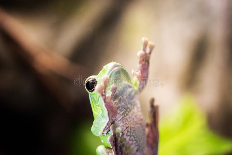 Small frog on window. royalty free stock image