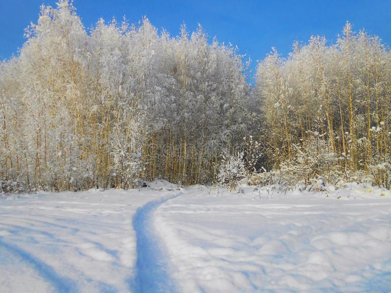 Small frosty birches in the field with path. stock photography
