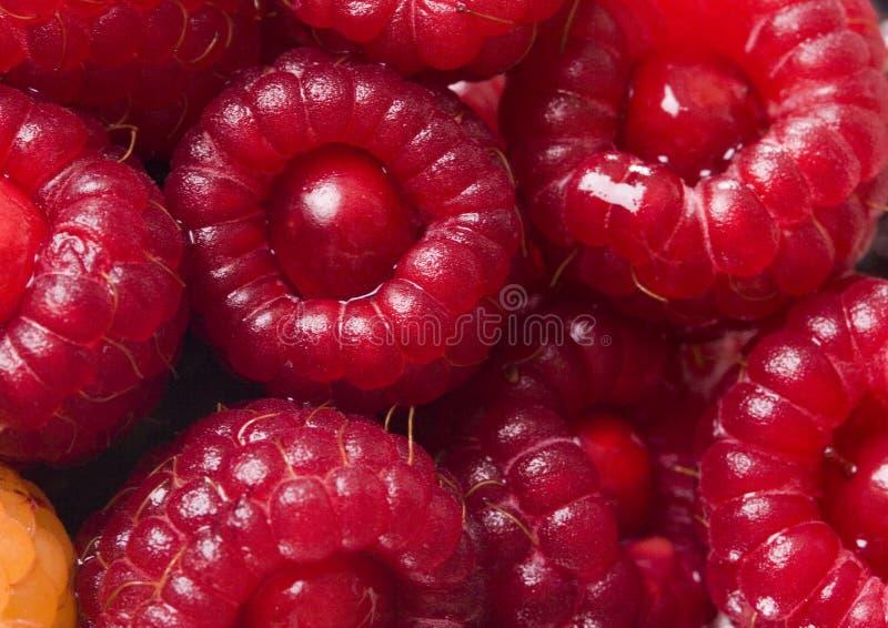 Small fruits royalty free stock photo