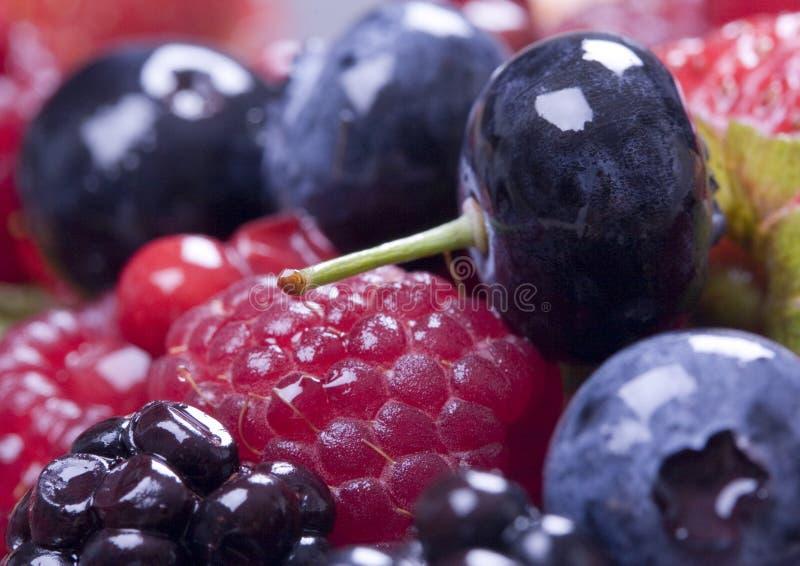 Small fruits royalty free stock image