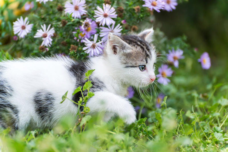 Small funny kitten in pink flowers stock photography