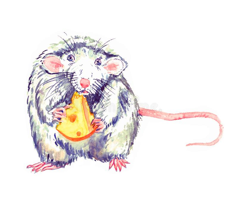 Small funny white-gray rat blue eyed standing, eating cheese and looking straight, watercolor painting. Isolated on white stock illustration
