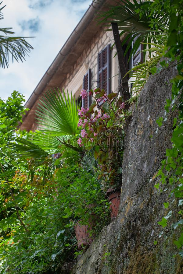 Small garden on the city wall. Perast, Montenegro stock photos