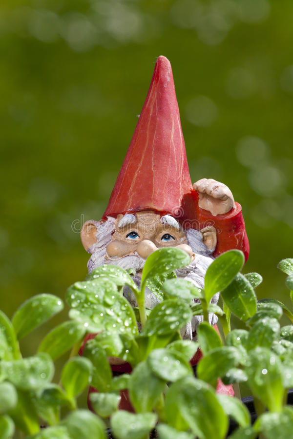 Small garden gnome behind borage plant. Small garden gnome is behind borage seedlings with copy space in the upper area of the image stock image