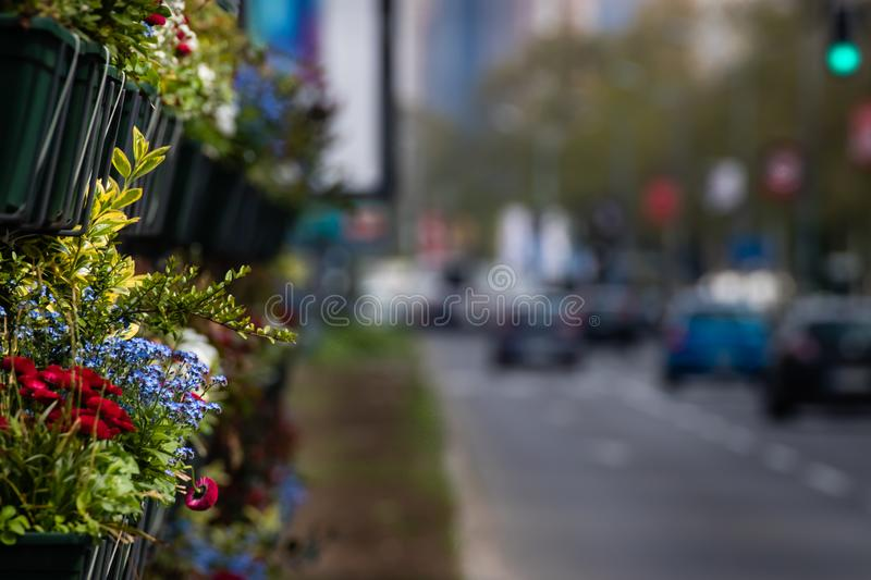 Urban rush hour with calm oasis of flowers royalty free stock photo