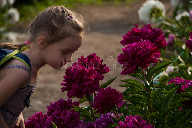 Small girl child smelling beautiful peony flower in the sunny garden stock photos