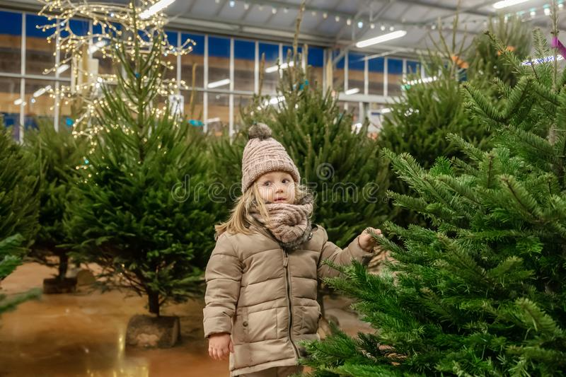 Small girl chooses a Christmas tree in the market stock images