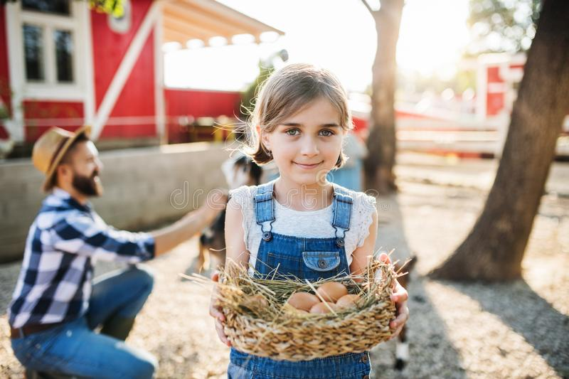 A small girl with father outdoors on family farm, holding eggs. royalty free stock photography