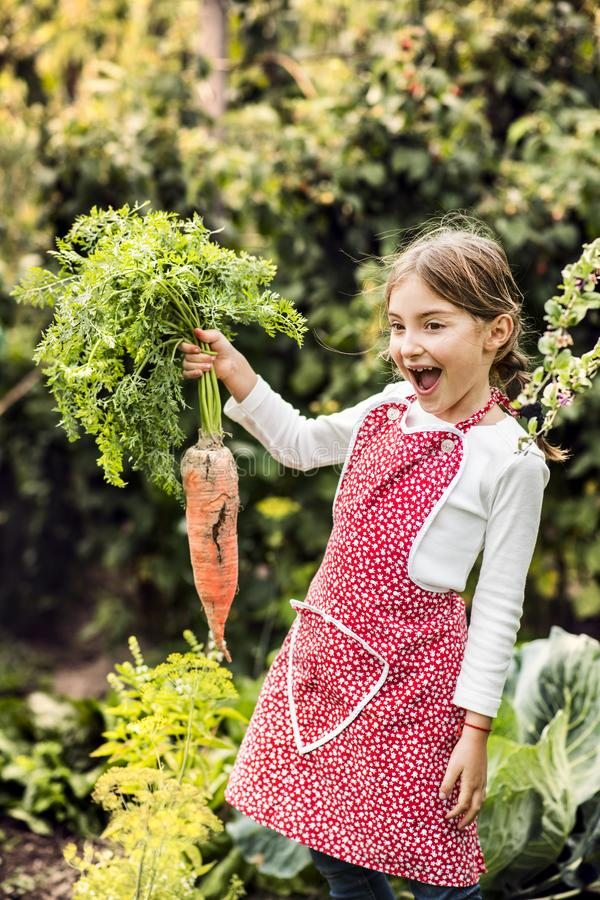 A small girl harvesting vegetables on allotment, holding a big carrot. royalty free stock image